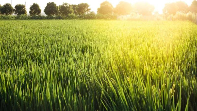 2020钾肥大合tongtan判结果出炉