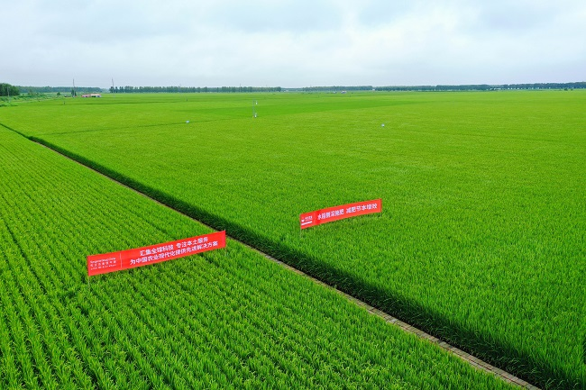 zhonghuahua肥水稻侧深施肥观摩活动走进jian三江